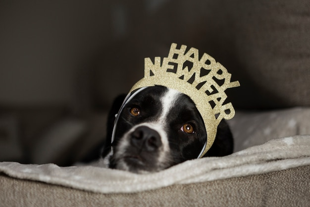 Cute dog with happy new year crown Free Photo