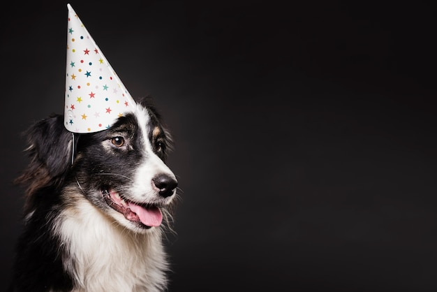 Cute dog with a hat Free Photo