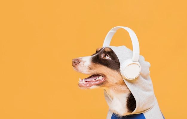Cute dog with headphones Free Photo