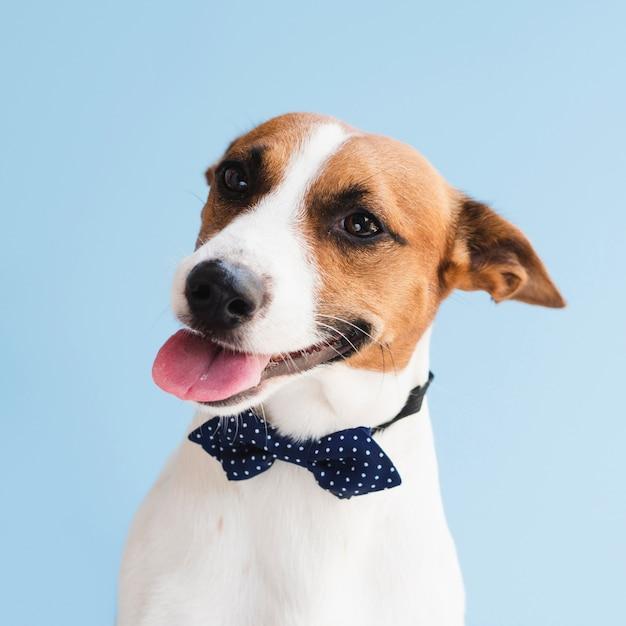Милая собака с языком и луком Бесплатные Фотографии