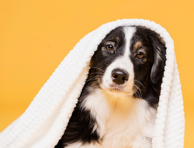 Cute dog with a towel Free Photo