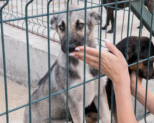 입양을 기다리고 울타리 뒤에 귀여운 강아지 무료 사진