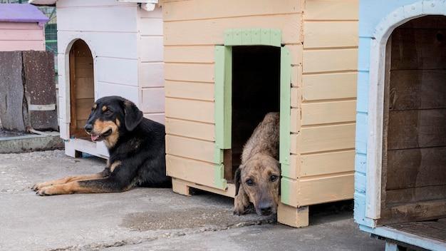 Simpatici cani nelle loro case in attesa di essere adottati Foto Gratuite