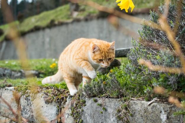 Simpatico gatto domestico che gioca con l'erba Foto Gratuite