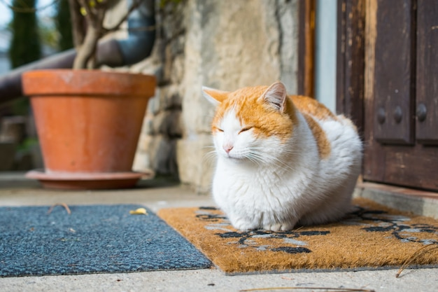 Cute domestic cat sitting in front of a door during daytime Free Photo
