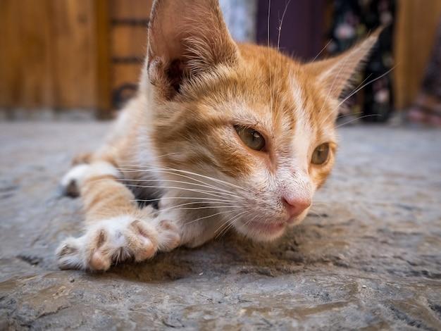 Simpatico gatto domestico arancione sdraiato a terra con uno sfondo sfocato Foto Gratuite
