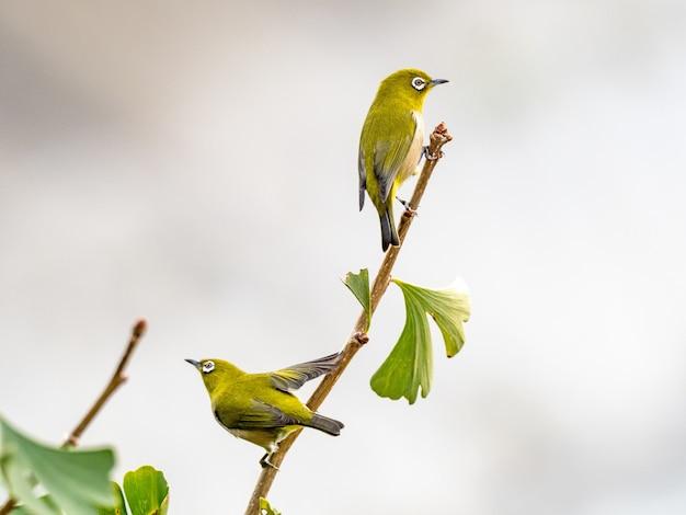 森の真ん中に木の枝の上に立ってかわいいエキゾチックな鳥 無料写真