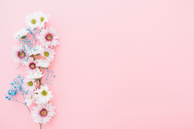 Cute flowers on pink background with space on right Free Photo