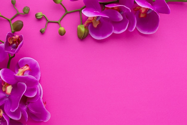 Cute frame with copy space pink background Free Photo