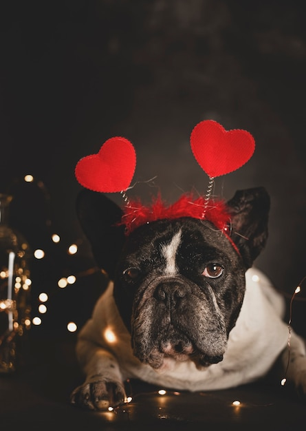 어두운 벽에 조명으로 바닥에 누워 마음의 머리 띠와 귀여운 프랑스 불독 강아지. 프리미엄 사진