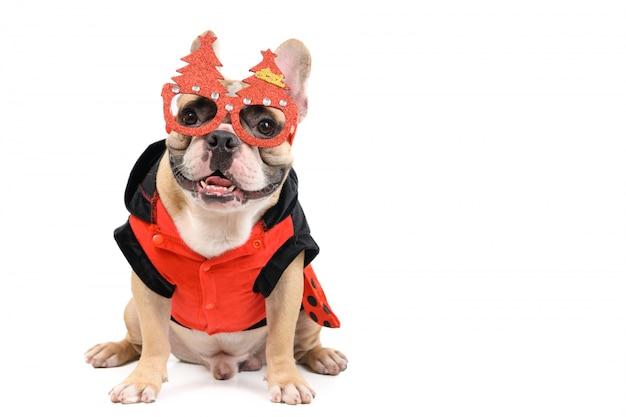 Милый французский бульдог в рождественских очках и сидит изолированно Premium Фотографии