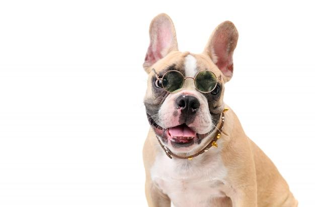 Cute french bulldog wear glasses and smile Premium Photo