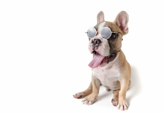 Cute french bulldog wear sunglass isolated Premium Photo
