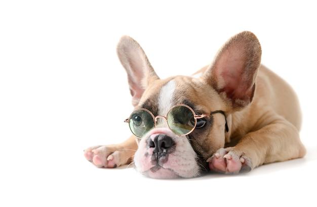 Cute french bulldog wear sunglass and sleeping isolated Premium Photo
