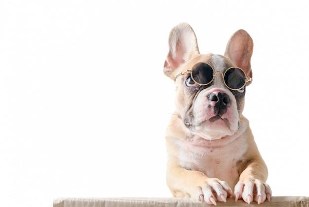 Cute french bulldog wear sunglass stand on box Premium Photo