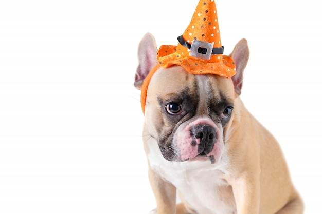 Cute french bulldog with hat halloween Premium Photo