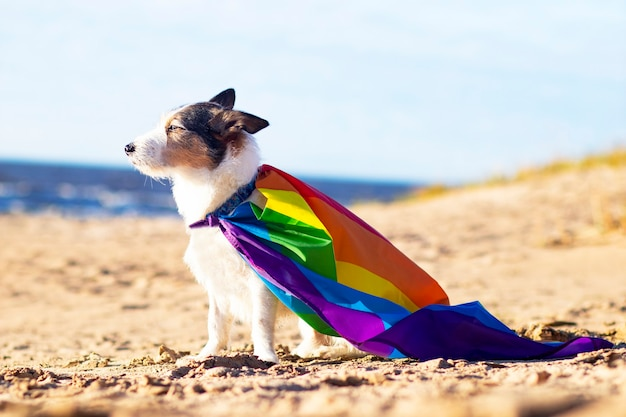 Cute funny dog with colorful rainbow gay lgbt flag. pride holiday concept. outdoor lifestyle Premium Photo