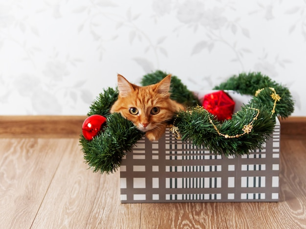 Cute ginger cat lying in box with christmas and new year decorations. fluffy pet is doing to play there. Premium Photo