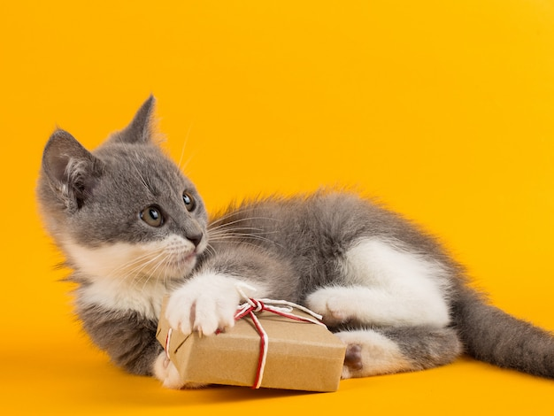 Cute gray kitten playing funny and fun with a christmas gift box on a yellow . Premium Photo