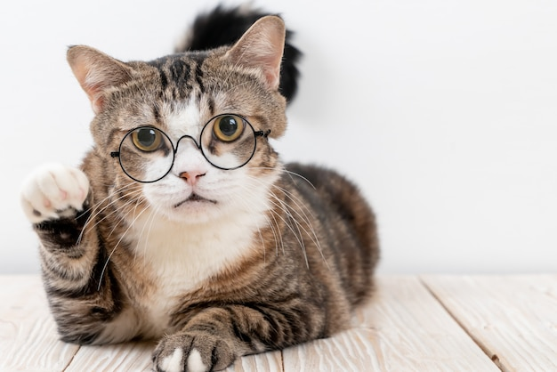 メガネでかわいい灰色の猫 Premium写真
