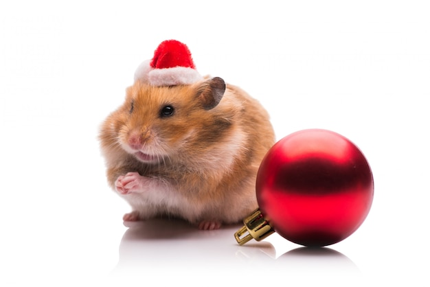 Cute hamster with santa hat isolated Premium Photo