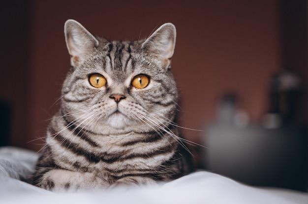 침대에 귀여운 고양이 무료 사진