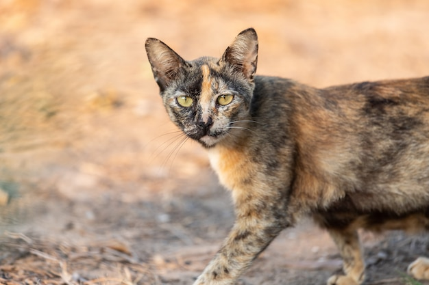 Cute kitten thailand in the garden grass under Premium Photo