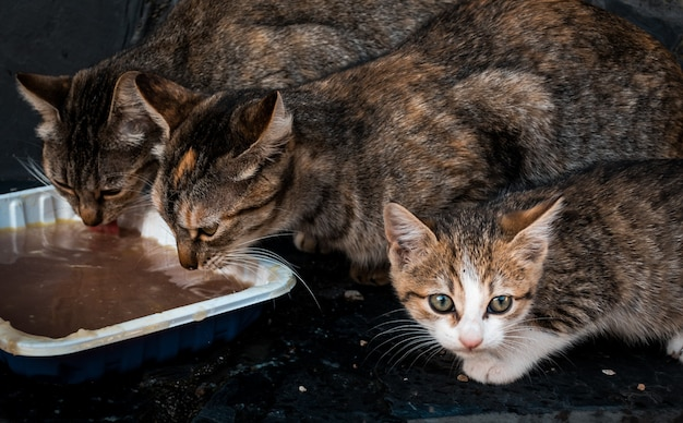 Cute kittens eating from a white pot Free Photo