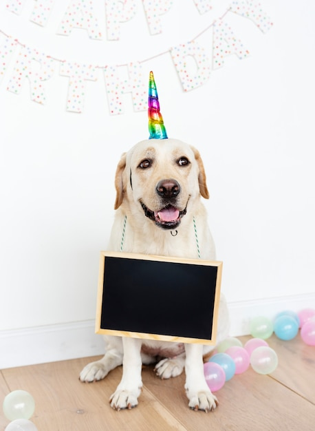 Cute labrador retriever with a unicorn hat Free Photo