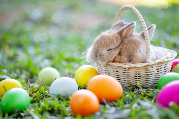 Cute little bunny sleeping in the basket and easter eggs in the meadow Premium Photo