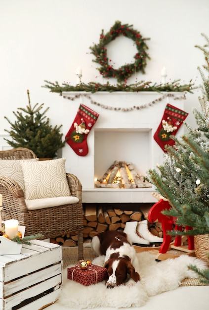 Cute little dog on a christmas decorated living room Free Photo