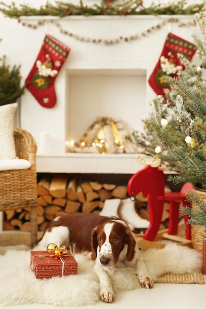 크리스마스 장식 거실에 귀여운 강아지 무료 사진