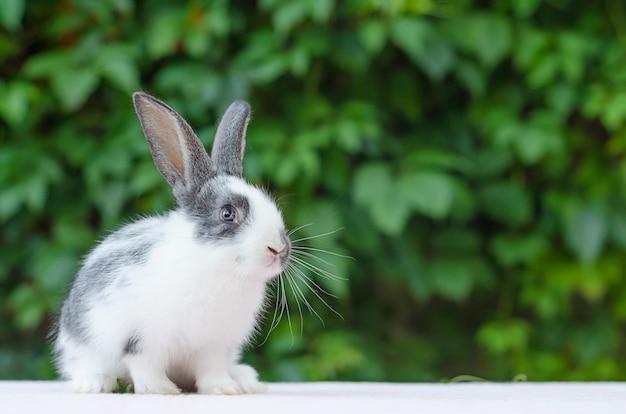 庭の緑の芝生にかわいい小さなふわふわウサギ。バニーはイースターのシンボルです。 Premium写真