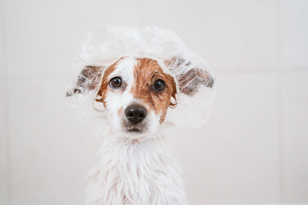 Premium Photo | Cute lovely small dog wet in bathtub, clean dog with funny  shower cap on head. pets indoors