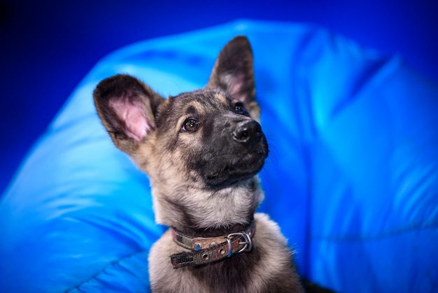 Cute mongrel dog. portrait. Premium Photo