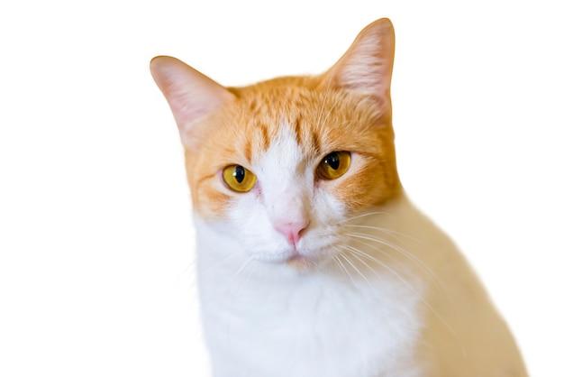 かわいいネイティブ猫 Premium写真