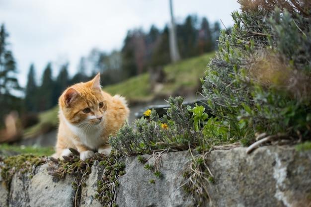 Simpatico gatto arancione che gioca con l'erba Foto Gratuite