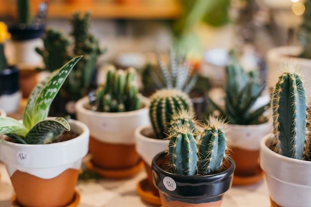 Graziose e graziose piante grasse e cactus in vasi di terracotta fatti a mano in vendita nel negozio di fiori di piante o concept store. Foto Gratuite