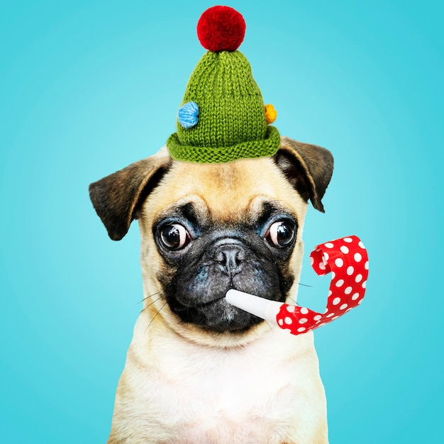 Cute pug wearing a green bonnet with a party horn Free Photo