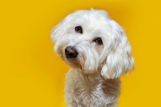Симпатичный щенок, наклонив голову в сторону. изолированные Premium Фотографии