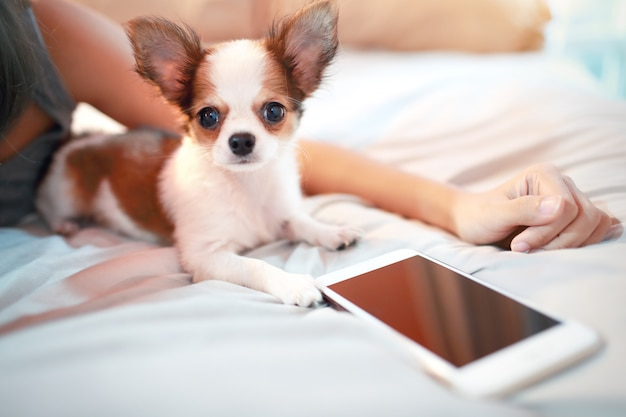 Cute puppy dog with smart phone Premium Photo