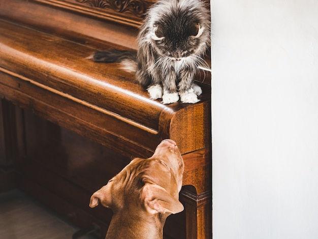 Cute puppy and loveable kitten. close up Premium Photo