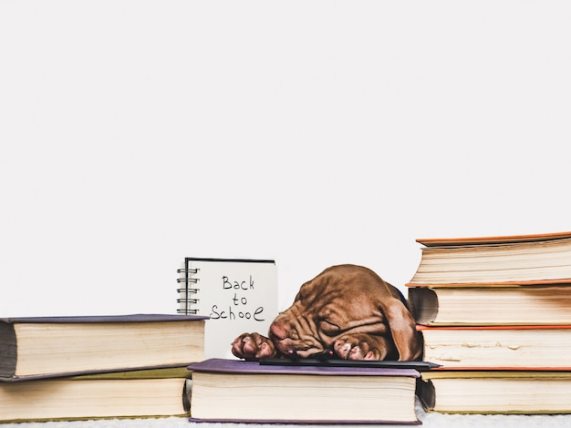 Cute puppy sleeping and vintage books. Premium Photo