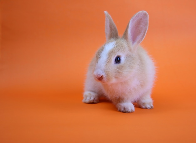 A cute rabbit on orange Premium Photo