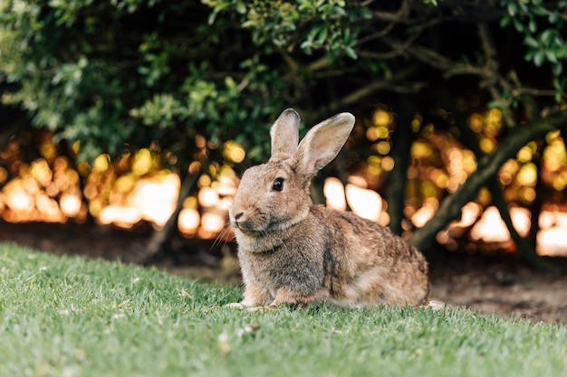 Cute rabbit sitting on green grass in park Free Photo