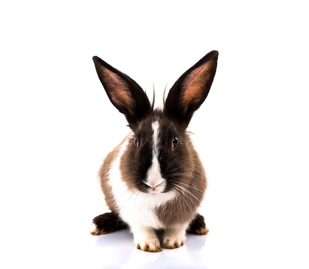 Cute rabbit on white background Free Photo