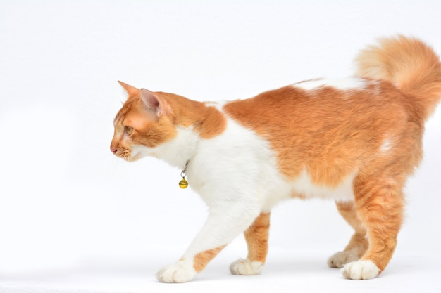 Cute Red Cat On White Background Photo Premium Download