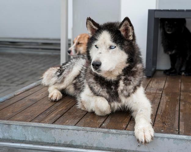 Simpatici cani da salvataggio al rifugio in attesa di essere adottati Foto Gratuite