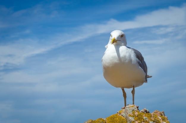 美しい曇り空の丘の上に腰掛けてかわいいカモメ 無料写真