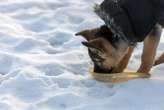 Acqua potabile del cane da pastore sveglio in inverno Foto Gratuite